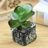 绿色植物沙漠玫瑰盆栽 植...