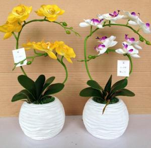 蝴蝶兰盆栽装饰 植物...