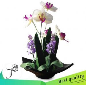 植物蝴蝶兰树脂盆景套...