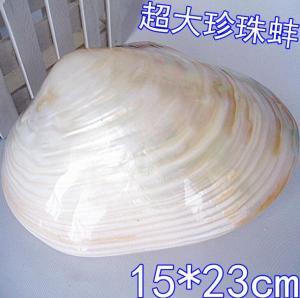 河蚌创意礼品大珍珠贝...