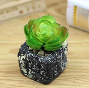 绿色植物宝石花盆栽 ...