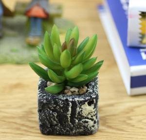 绿色植物绿美人盆栽 ...